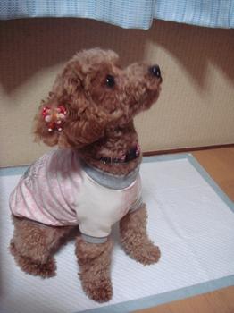 ピンクお洋服♪